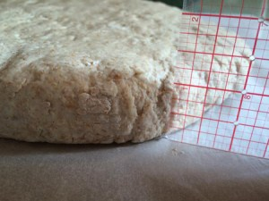 roll the dough into a circle shape 1