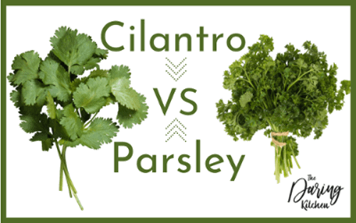 Cilantro vs Parsley - What Is The Difference?