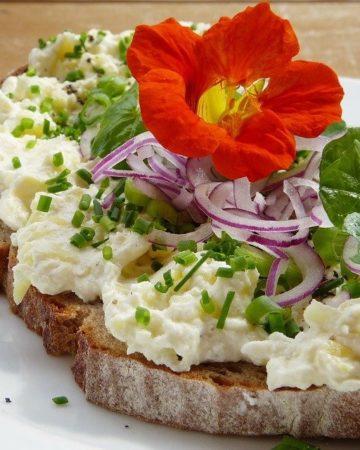 Best Vegan Cream Cheese Varieties