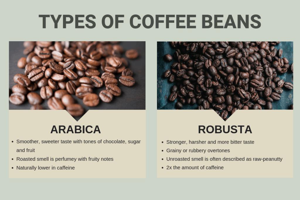 Types of Coffee Beans Used to Make Dark Roast Coffee